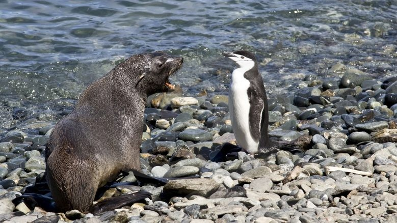 A seal talking to a penguin